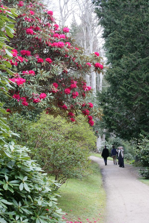 Gardens Wicklow