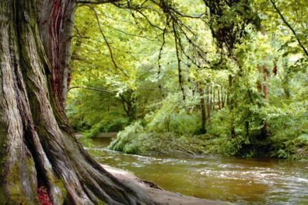 River Walk Powerscourt