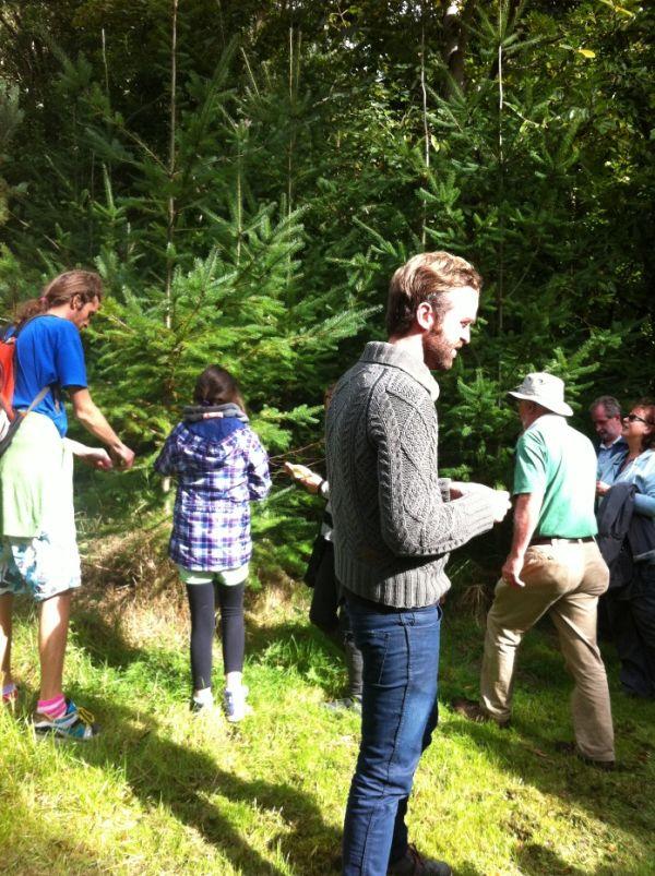 Spruce resized 600