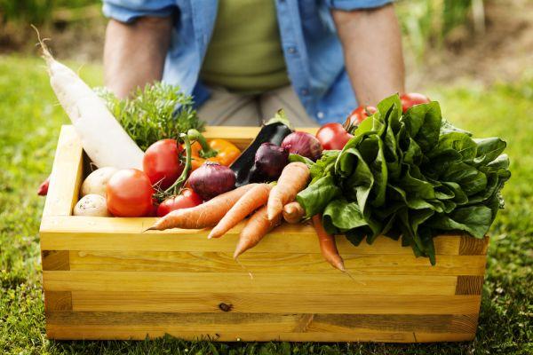 Growing Fruit & Veg with Ena Ronayne resized 600