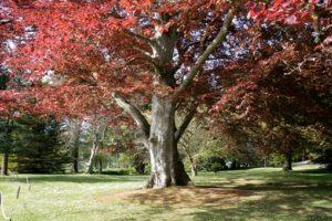Trees of Powerscourt Gardens