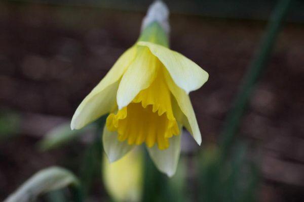 Head Gardener's Blog – Powerscourt Gardens