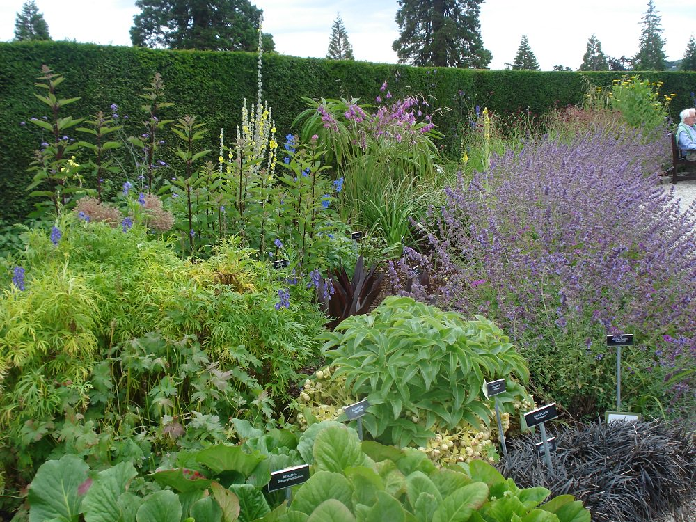 Heavenly herbaceous border