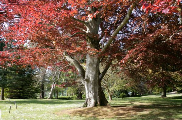 National Tree Week launches at Powerscourt
