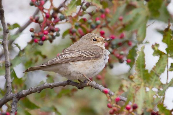 Novice Birders Needs and Wants – Bird-watching at Powerscourt