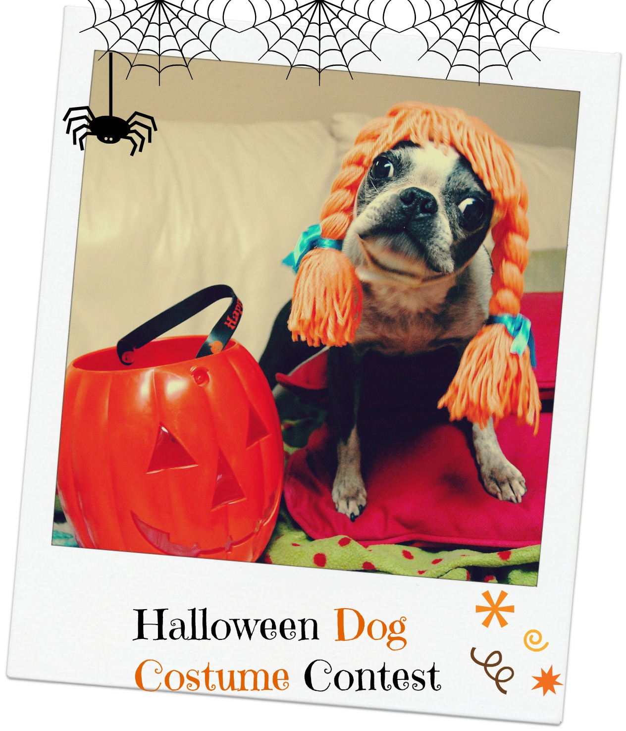 Howl-A-Ween Dog Costume Contest at Powerscourt Estate