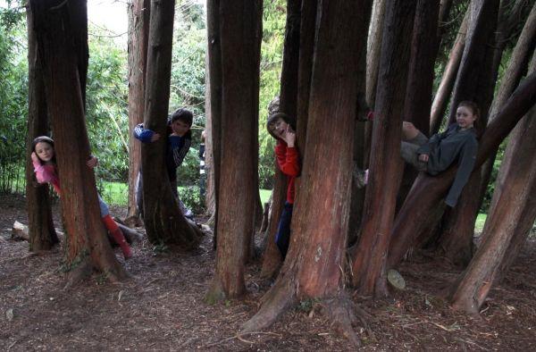 Tink's Nature Trail in Powerscourt Gardens