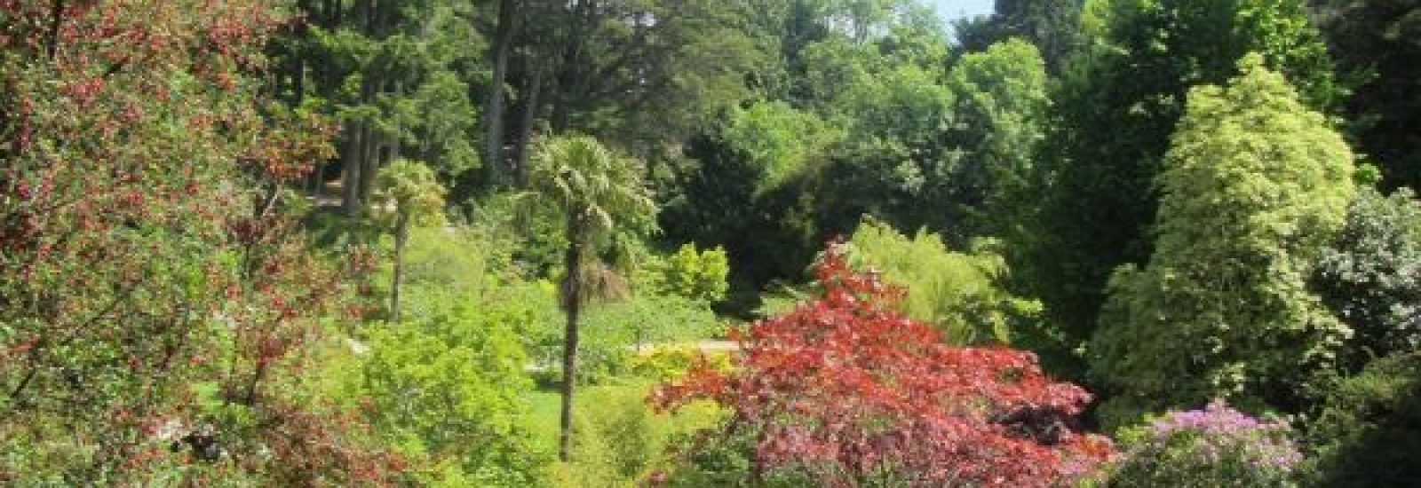 A Trip to the Orient – the Japanese Gardens at Powerscourt