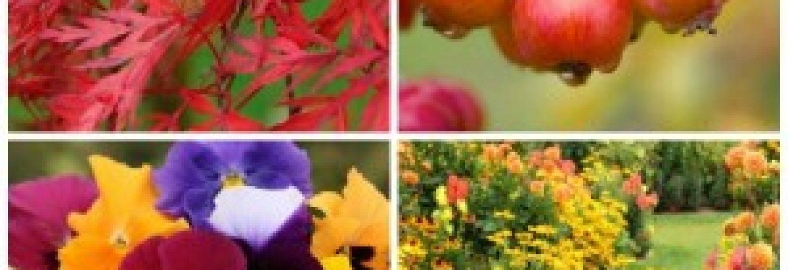 Autumn Collages Powerscourt Gardens