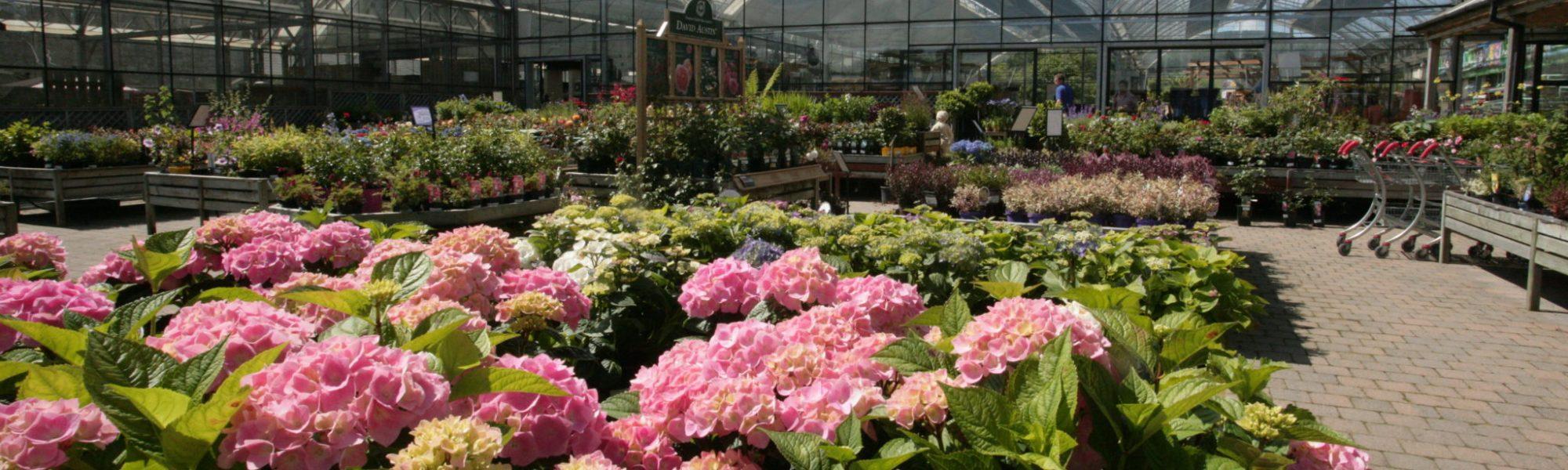 Garden Pavilion Rhododendron
