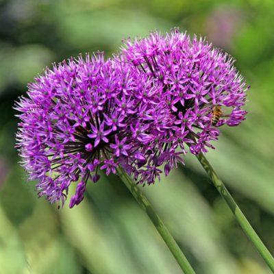 Garden Pavilion flowers closeup