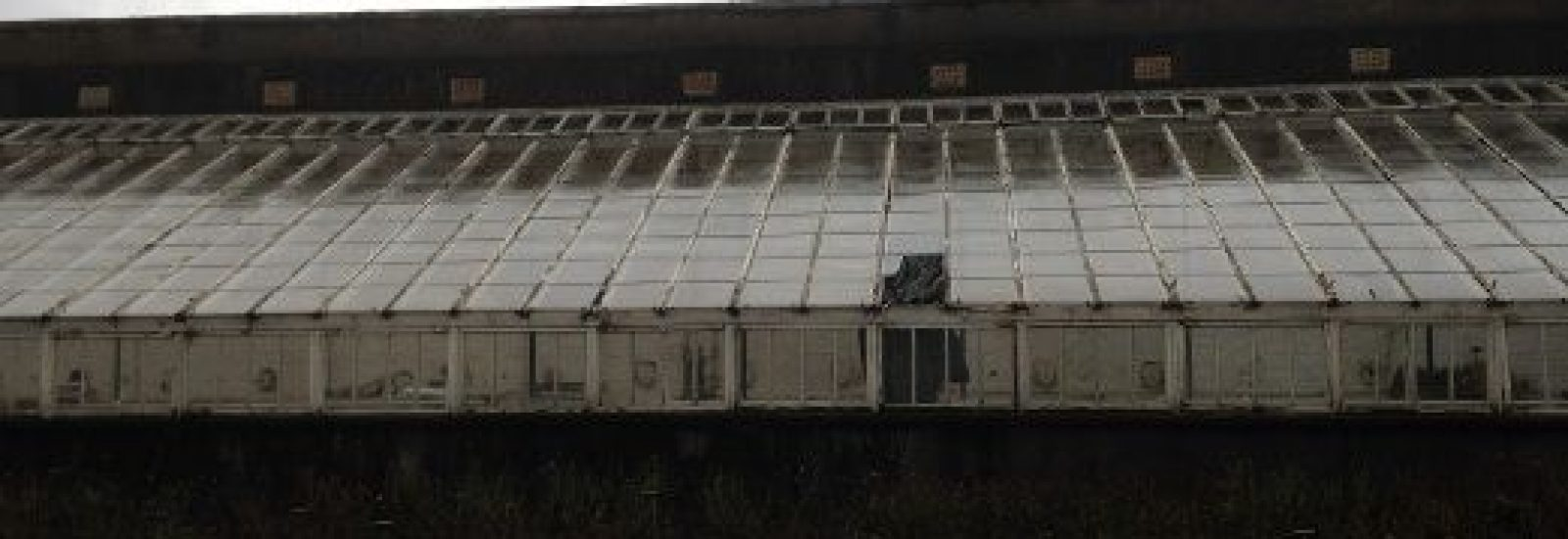 Powerscourt Greenhouse before renovation