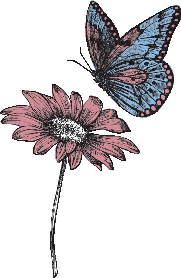 butterfly-flower2